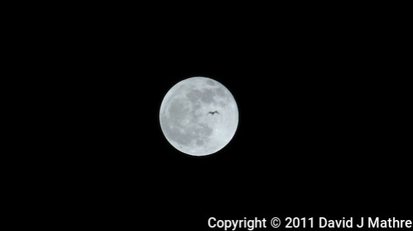 Bird Flying Past Full Moon. Frame Grab from a DSLR Video taken with a Nikon D3s and 600 mm f/4 VR llens and TC-E III 20 teleconverter (David J Mathre)