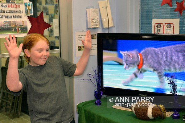 Wantagh, New York, USA. February 7, 2016. Volunteer MIKE DAY, 13, of Wantagh, looks as if he's giving coaching advice to the gray kitten player with the red collar on TV in Hallmark Channel Kitten Bowl III. At Last Hope Animal Rescue's Open House, the guests cheer on their team, the Last Hope Lions, which the tiny tabby szs a member of. Over 100 adoptable kittens from Last Hope Inc and North Shore Animal League of America participated in the pretaped games, and the Home and Family Felines won the 2016 championship, which first aired the day of Super Bowl 50. (Ann Parry/Ann Parry, ann-parry.com)