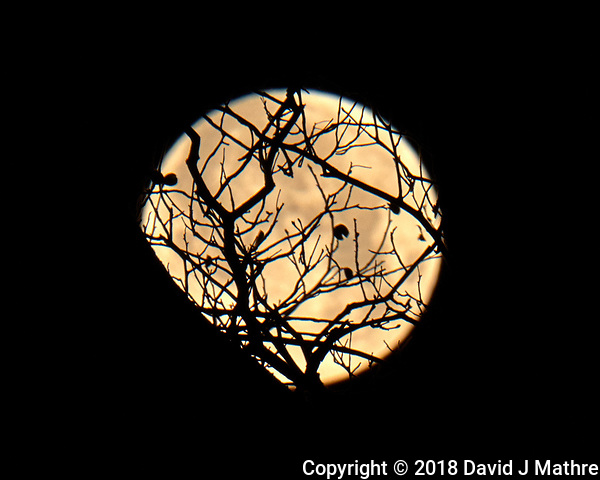 Full (Blue, Super, Blood) Moon at Midnight. Winter Night Sky in New Jersey. Image taken with a Fuji X-T2 camera and 100-400 mm OIS lens (ISO 200, 400 mm, f/16, 1/125 sec). (David J Mathre)