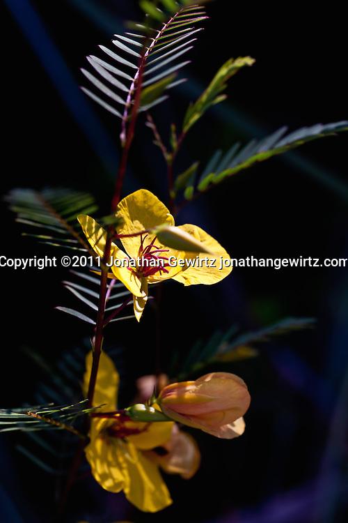 A small flowering plant in the Florida Everglades. (Jonathan Gewirtz   www.jonathangewirtz.com)