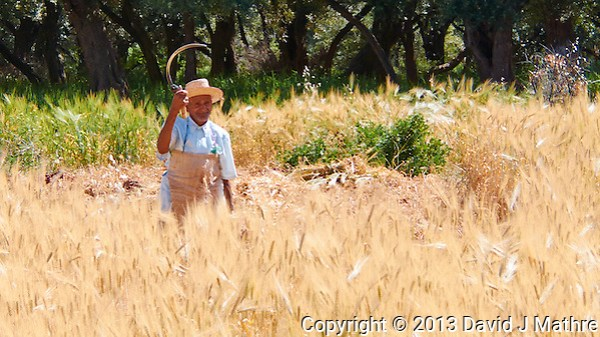 Berber Farmer Reaping the Wheat. Atlas Mountains in Morocco. Image taken with a Nikon 1 V2 Camera and 10-100 mm VR lens (ISO 160, 24 mm, f/5, 1/250 sec). (David J Mathre)