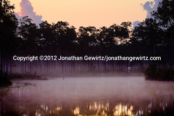 The sky brightens above morning fog around the pond at Long Pine Key campground in Everglades National Park, Florida. (© 2012 Jonathan Gewirtz / jonathan@gewirtz.net)