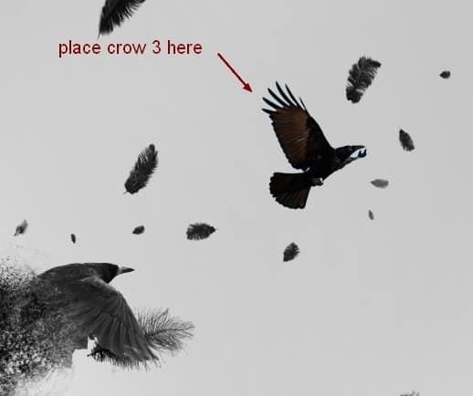 crow22
