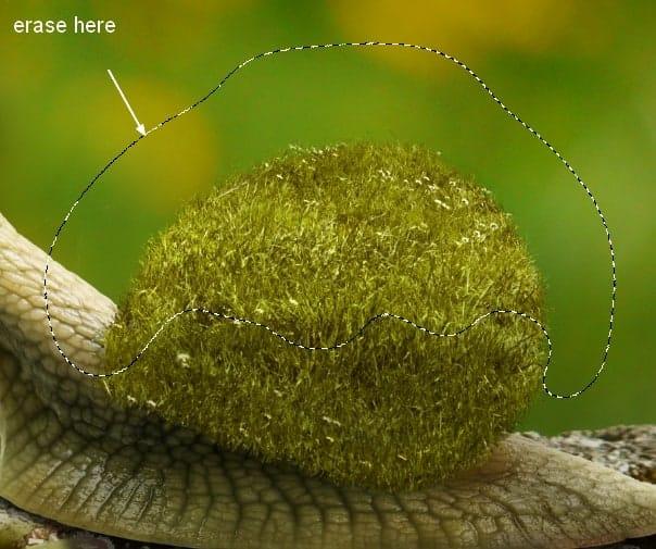snail12a