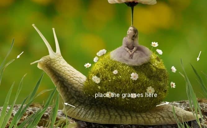 snail28