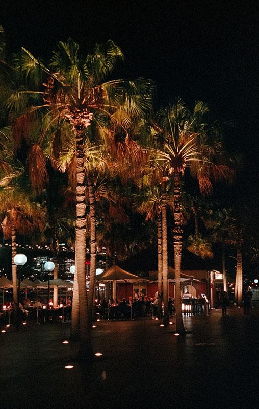 Palms in Circular Quay | Leica M3 | Summicron 5cm f/2 DR | Fujifilm Natura 1600