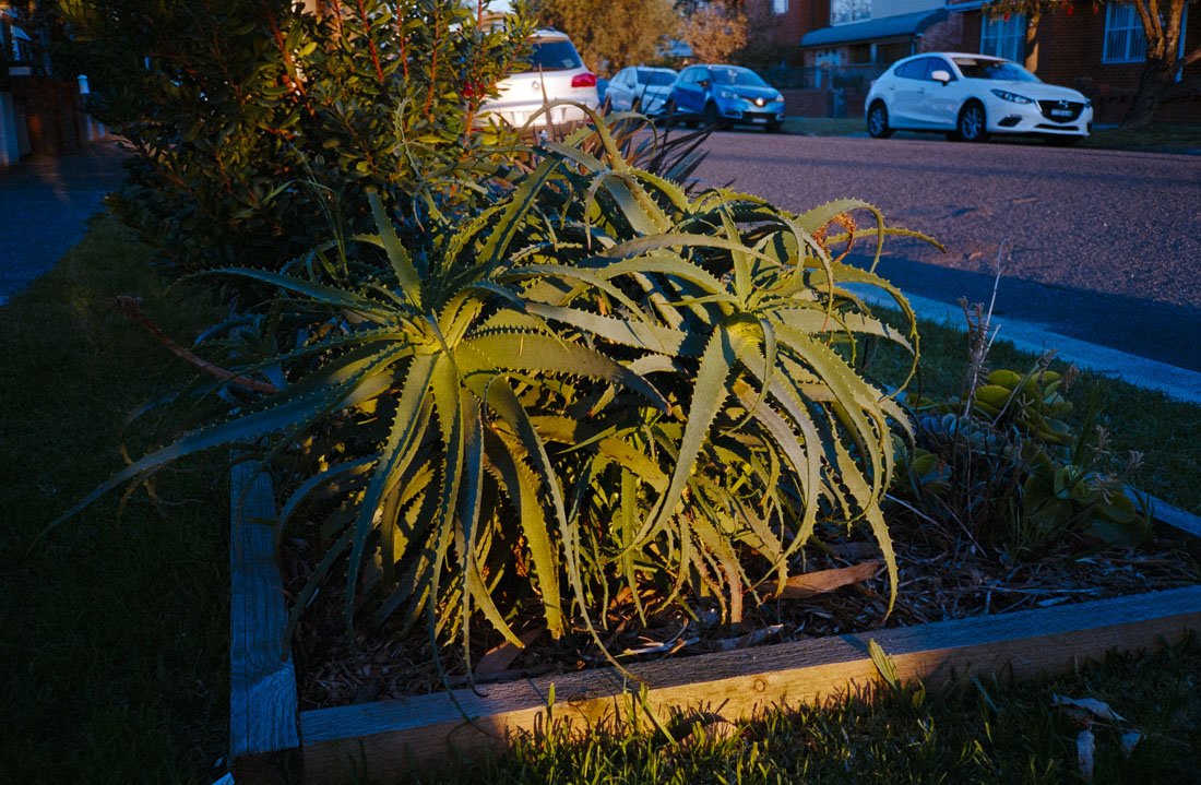 Plant in sunlight | Nikon RD2 | Kodak Ultramax 400
