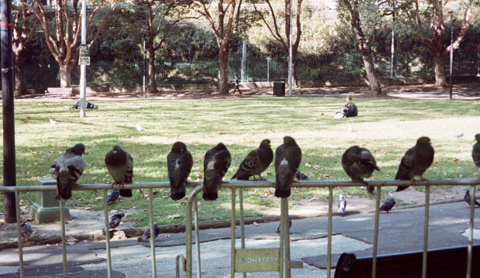 The birds | Canon Elph 2 | Fujifilm Nexia A200 (expired)