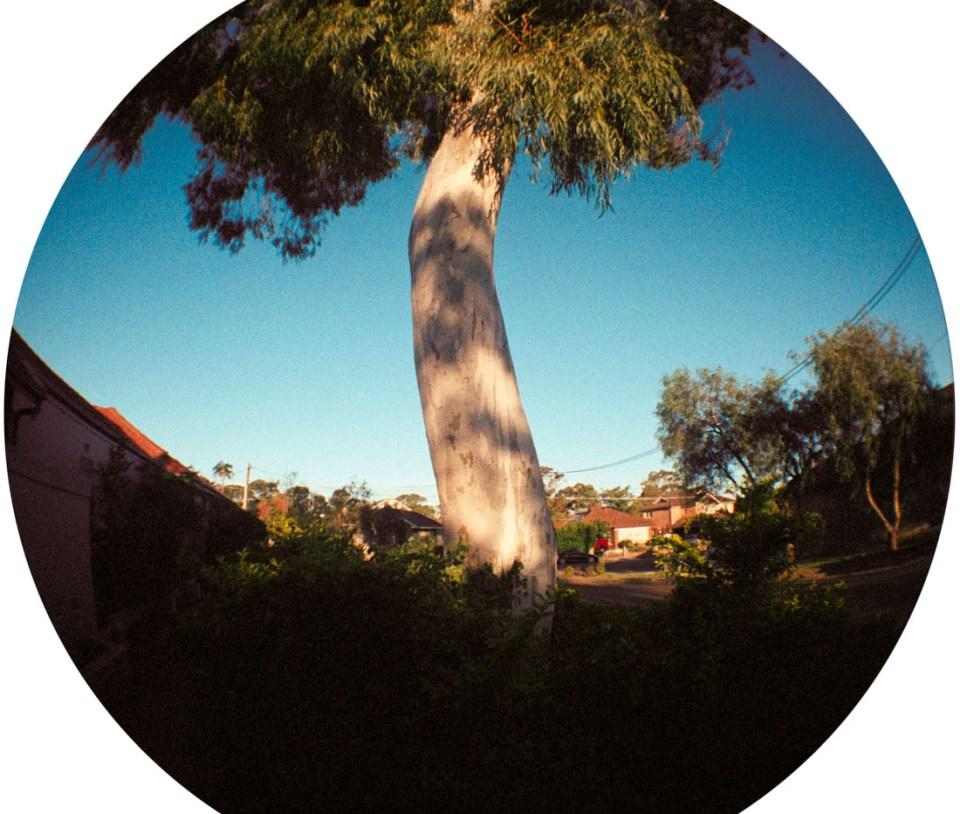Tree | Lomography Fisheye 2 | Kodak Pro Image 100
