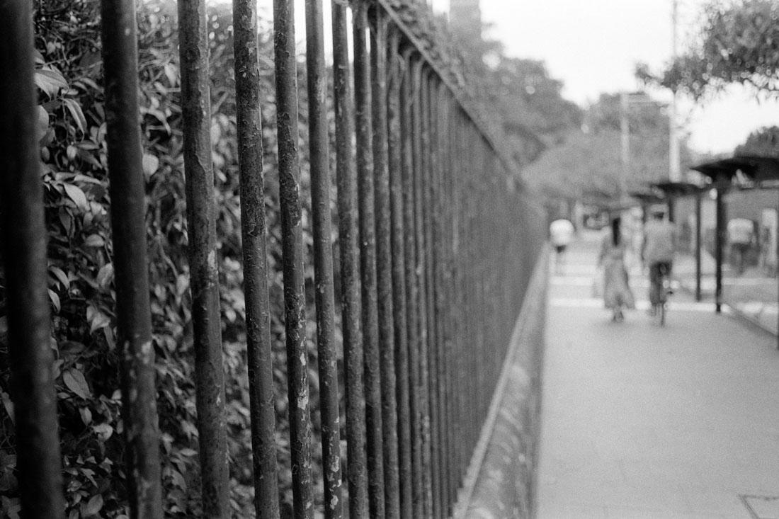 Fence Line | Pentax Spotmatic SP | Pentax Super-Takumar 35mm f/3.5 | Ilford HP5 Plus