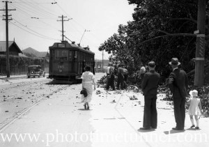 Workers removing tree limbs as a tram passes along Maitland Road, near Islington Park, Newcastle, NSW, November 26, 1935.