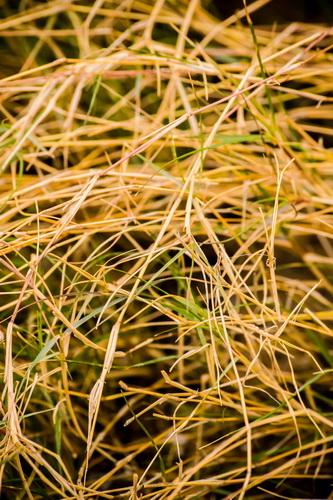 干し草の山