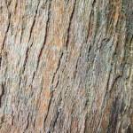 F0000003_木材の背景画像【無料コンテンツ・写真素材・商用可】