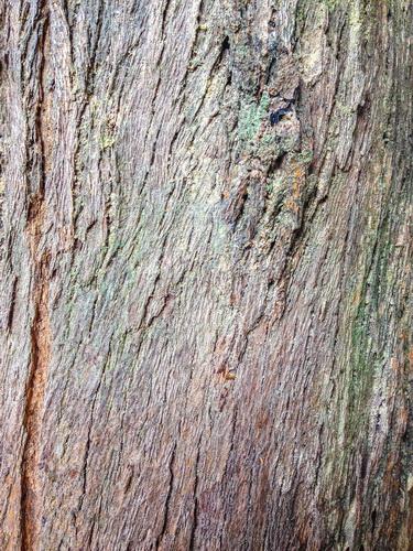 F0000004_木材の背景画像【無料コンテンツ・写真素材・商用可】
