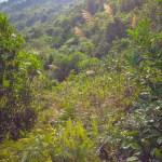F0000031_森林の背景画像【無料コンテンツ・写真素材・商用可】