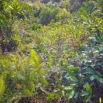 F0000033_森林の背景画像【無料コンテンツ・写真素材・商用可】
