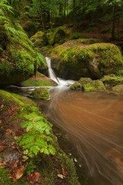 dichte Wälder im Schwarzwald © Raik Krotofil