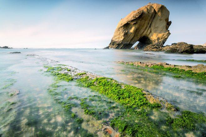 SeaWeeds | Santa Cruz | © Timo Zilz