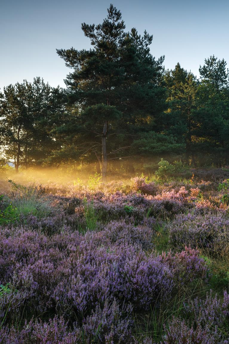 Mehlinger Heide - ©Raik Krotofil