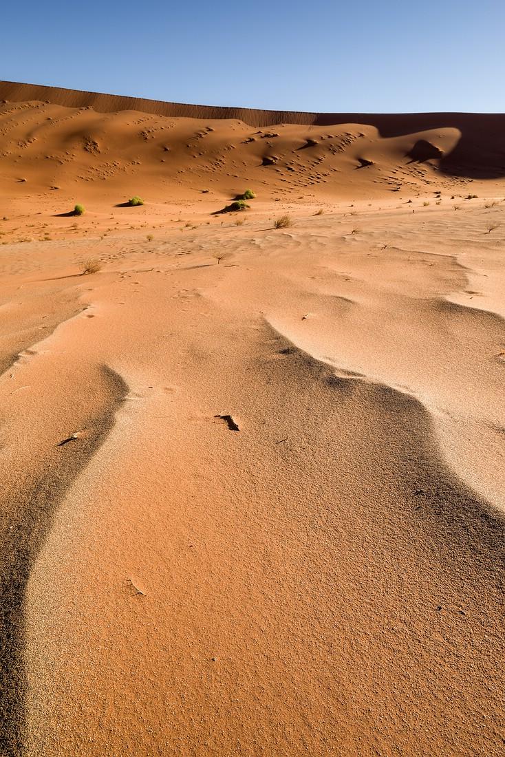Deadvlei © Raik Krotofil
