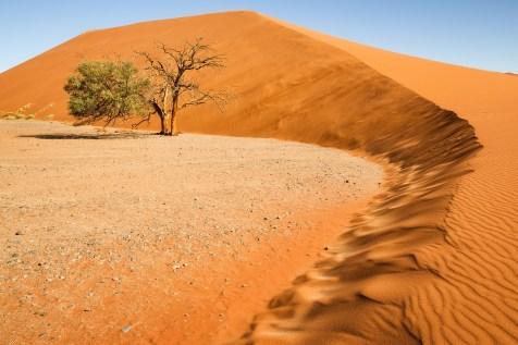 Düne 45 Namib Wüste © Raik Krotofil