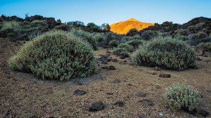 Teide © Waltraud und Michael Schlecht