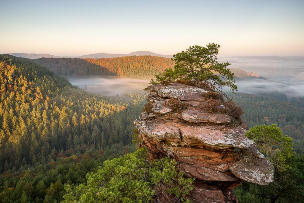 Buchkammerfelsen Pfälzerwald Sonnenaufgang