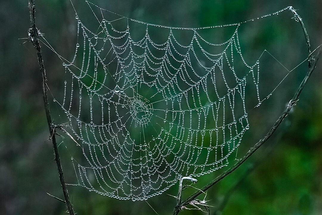 Fogweb1080x720_8164web
