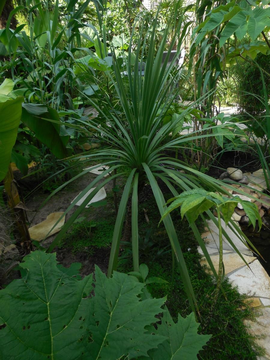 Iwans jungle tuin  Foto album en video