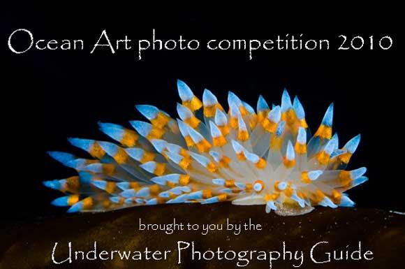 Ocean Art Photo Contest 2010