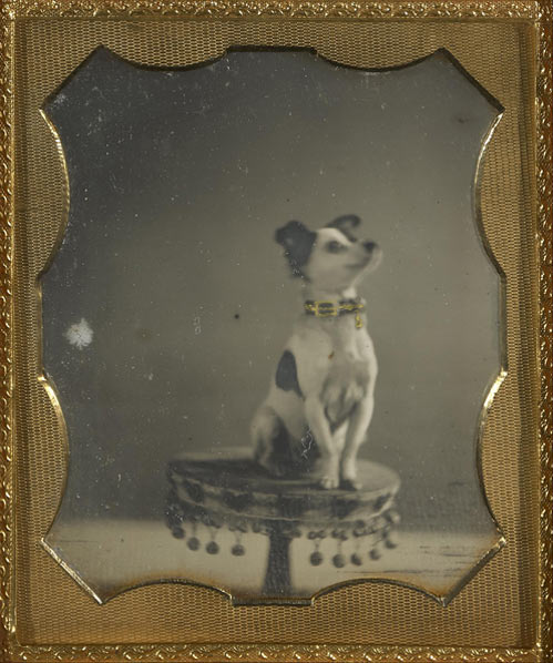 [Dog sitting on a table], about 1854. Unknown maker, American. Hand-colored daguerreotype. 1/6 plate. 2 11/16 x 2 1/4 in. 84.XT.1582.16. The J. Paul Getty Museum, Los Angeles