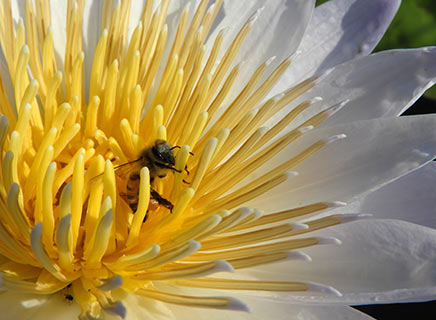Nikon COOLPIX B700: Image Courtesy of Nikon