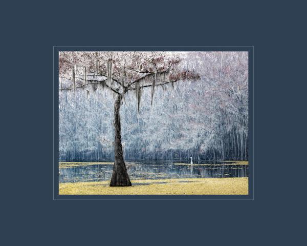 Susan Thweatt - Ethereal Morning
