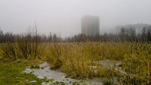 Берег Лахтинского разлива