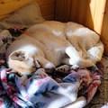 Осенне-солнечные деньки... Не будите спящую собаку... От греха подальше не будите...
