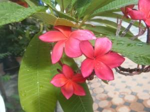 南国らしい赤い花