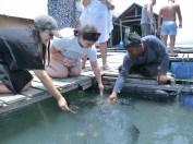 ラグジュアリーカタマラン船でゆく クラビ&ヤオノイ島ツアー内容の紹介その1