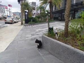 セントラルパトンの猫