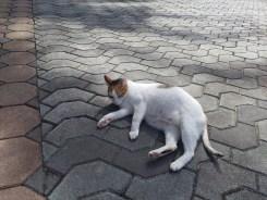 ロイヤルパラダイスの猫