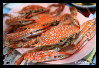 thai-blue-crab