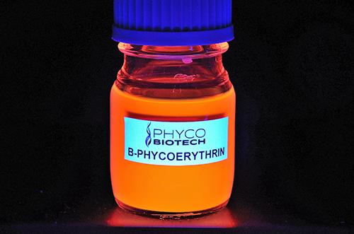 B-Phycoérythrine flacon Fluorescent