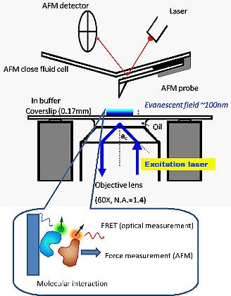 Surface and NanoScience Laboratory-Introduction-AFM - TIRFM system