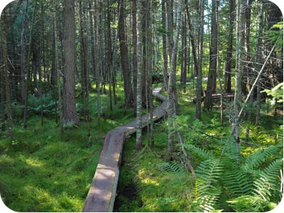 lakenenland bog walk