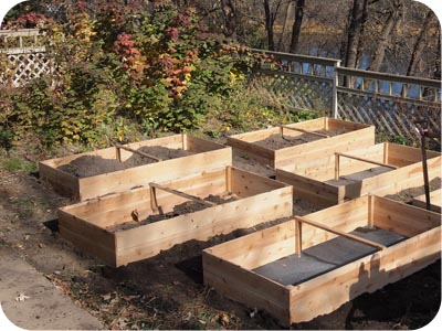 Cedar raised beds