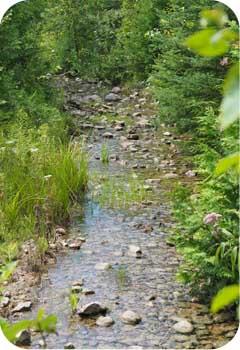 dynamite creek