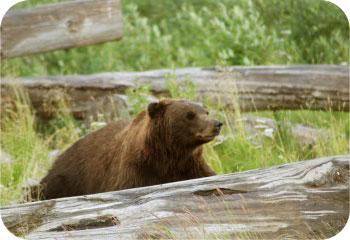 FIrst Bear Market