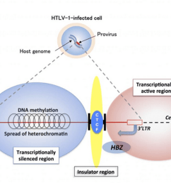 mechanisms of persistent infection for the human t cell leukemia virus [ 1200 x 663 Pixel ]