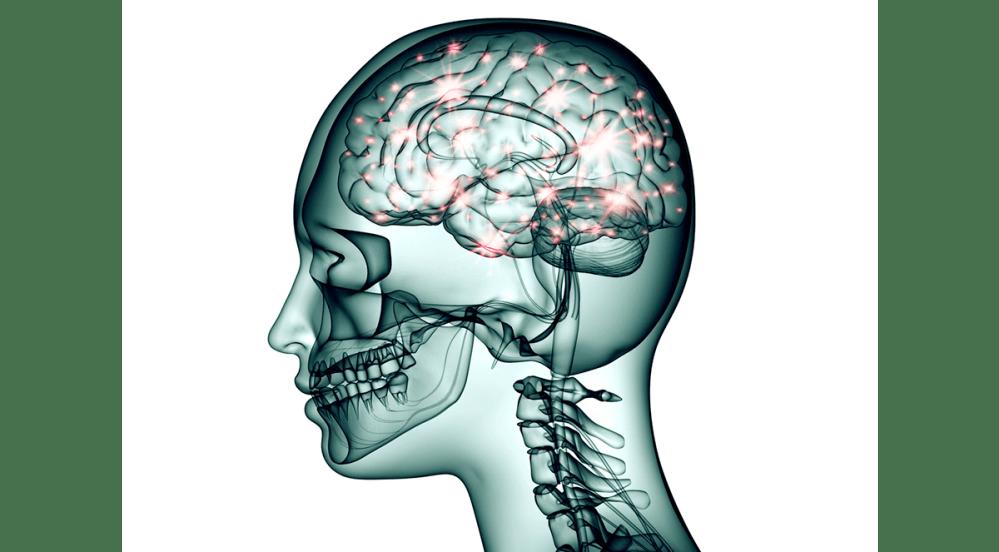 medium resolution of new technology will create brain wiring diagrams