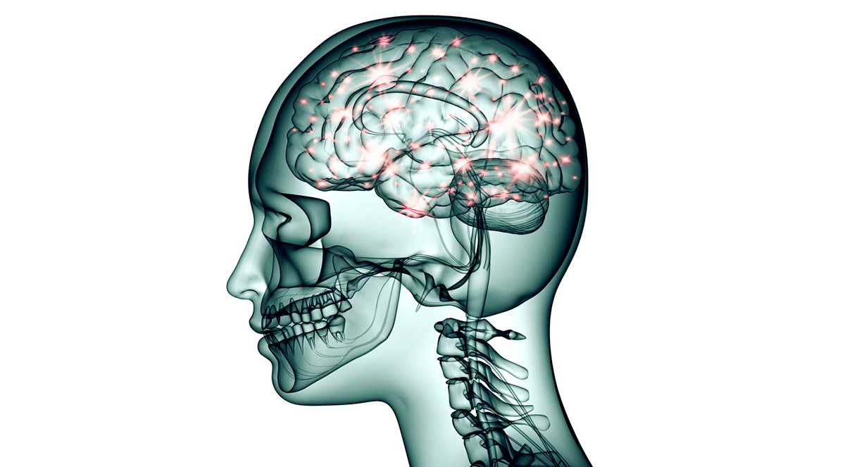 hight resolution of new technology will create brain wiring diagrams