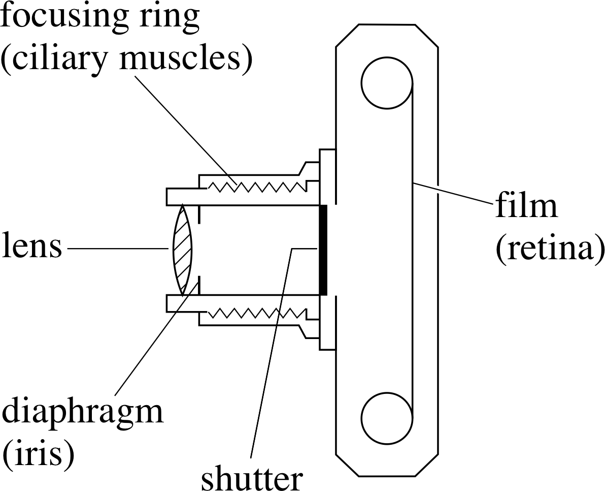 simple microscope diagram th400 wiring pplato flap phys 6 4 optical instruments